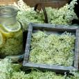 V ohlajeno mešanico dodajte bezgove cvetove in na kolobarje narezano bio limono.