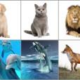 Katera izmed živali vam je najljubša?