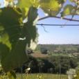 Pogled na vinograde.