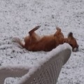 sneg, kamnik, pes