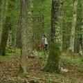 gozd narava gobar