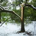 sneg, drevje5