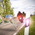 srna, motor, avto, nesreča