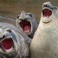 tjulni, Comedy Wildlife Photography Awards