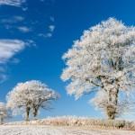 zima, mraz, jutro