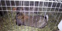 Društvo gojiteljev malih pasemskih živali Novo mesto razstava