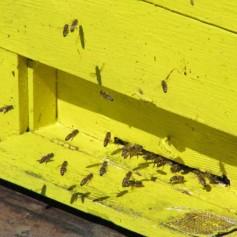 Čebelnjak, čebele, čebelarstvo
