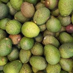 avocado-164590_1280
