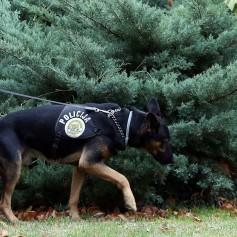 hrvaška policija1