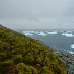 antarktika, mah