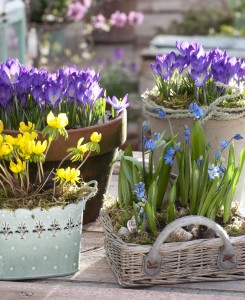 Balkonsko cvetje: pa kaj zato, če je (še) zima!