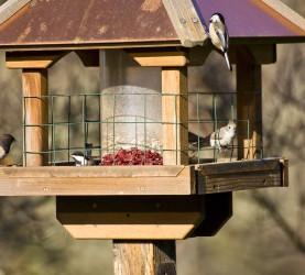 ptice v ptičji hišici