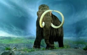 Ruski deček našel izjemno dobro ohranjene ostanke mamuta