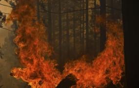 Požar v Španiji uničil kar 8000 hektarov gozda