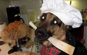 Kuhar je poskušal skuhati mačko ogrožene vrste in končal za rešetkami