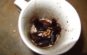 Kava s ščurkom - v Dubrovniku za 17 kun