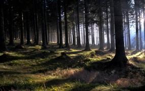 Kaj je zakuhal Židan: prekupčevalci slovenski les prodajajo v Avstrijo