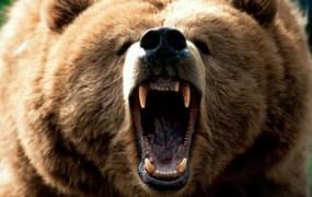 Na Aljaski medved pojedel fotografa