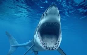 Morski psi na nogometnih tekmah nimajo kaj iskati