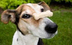 Avstrijski poštarji bodo s seboj nosili pasje piškote