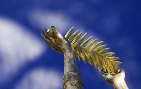 V Cannesu se bo drevi zasvetila zlata palma