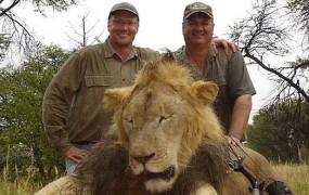 Ameriški zobozdravnik v Zimbabveju ubil slavnega in zaščitenega leva