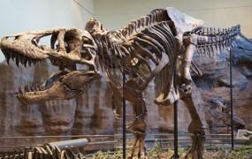 Asteroid ni edini krivec za izumrtje dinozavrov