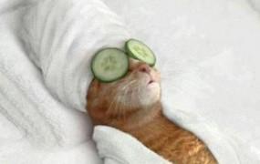 Belgijci med racijami objavljali fotografije mačk