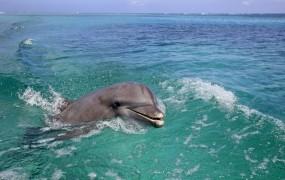 Brezobzirni kopalci so do smrti izmučili izgubljenega mladiča delfina
