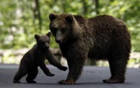 """Na gradu Drakule turiste """"straši"""" zaščitniška medvedka"""