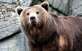 Medved na dolenjski avtocesti povzročil trčenje več vozil