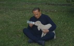Berlusconi se vrača v politiko - kot zaščitnik živali