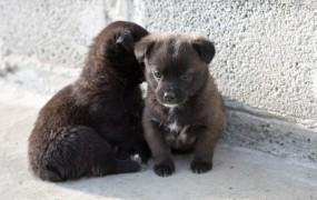 Italijanskega politika zalotili, ko je hotel zavreči pasje mladiče