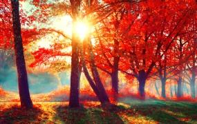 """Pripravite se na """"babje poletje"""" oktober bo sončen s temperaturami celo do 25 stopinj"""