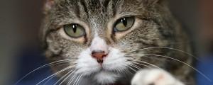 macka macek muca