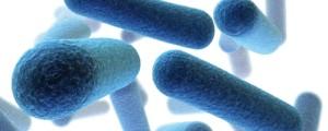 bakterije-antibiotiki_06.09.13