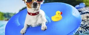 vročina, sonce, poletje, pes