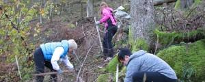 Sajenje dreves v okolici Logatca
