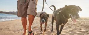 sprehod sprehajanje psov