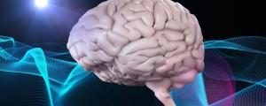 možgani, zavest