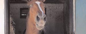 Predsednik Trump, dirkalni konj
