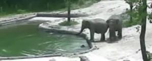 sloni, mladič, reševanje,