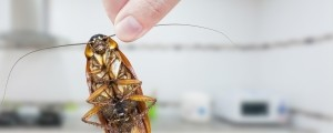 ščurek