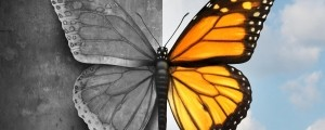 metulj, bipolarna motnja