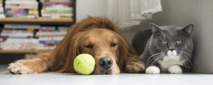 pes in mačka 1