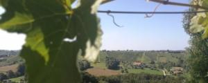 vinogradi1