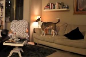 VIDEO: Kako presenetiti lastnike