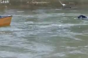 VIDEO: Izreden pasji reševalec