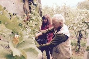 FOTO: Jasna Kuljaj iz vinograda v Stražo