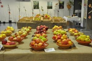 FOTO: Razstava sadja v Semiču